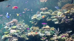 A colourful habitat in the SEA Aquarium