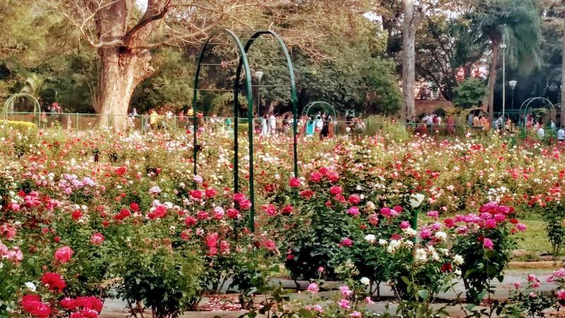 Rose Garden @Lalbagh