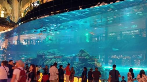 Aquarium @Dubai Mall