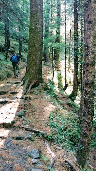 Beginning the trek through a forest