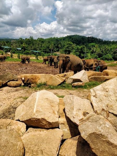 @Pinnawala Elephant Orphanage