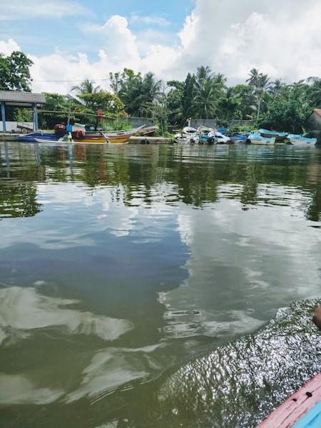 Mangrove boat ride in Madu river