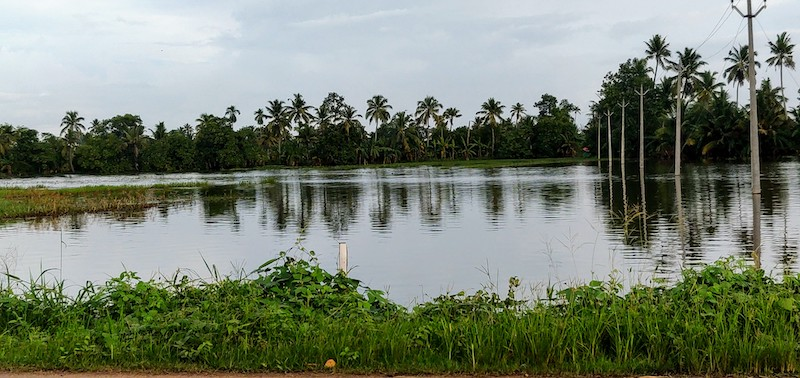 The erstwhile paddy fields along the Kottayam-Kumarakom route