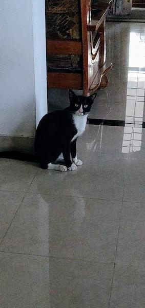 Cat @home