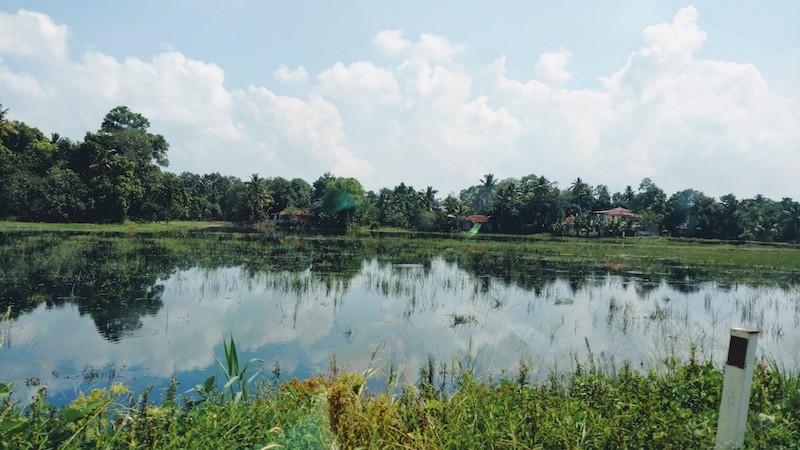 Kerala : Water logged paddy fields