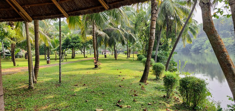 Coconut trees swaying on the green banks along the Kappil river at Taj Bekal