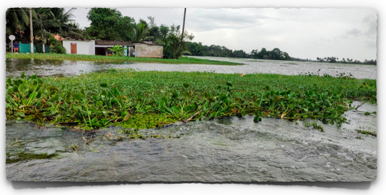 Flooded paddy fields