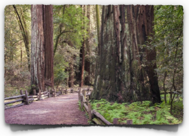 Henry Cowell Redwoods State Park in Santa Cruz County near the town of Felton