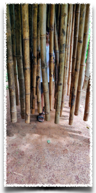 The Bamboo grove - as you walk through the bamboo, touching them gently, you make your unique music