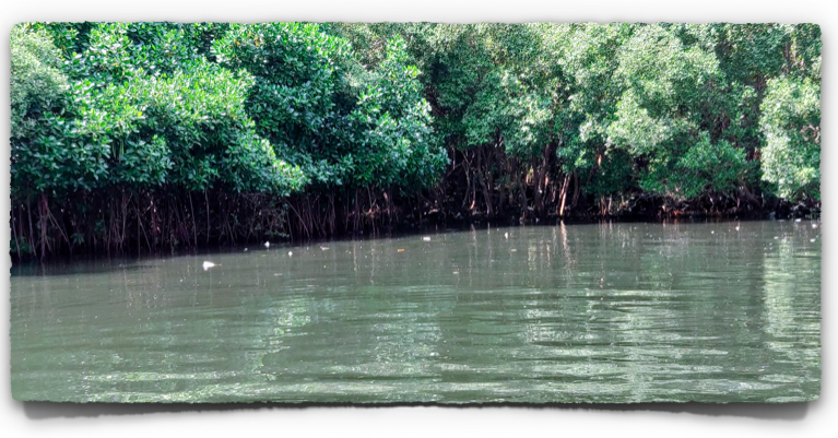 Mangrove forest in Pondicherry