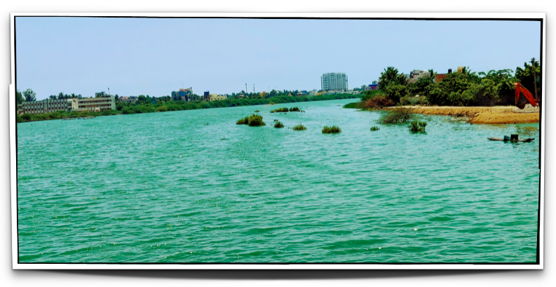 The road leading to the Taj Fisherman's Cove had this waterbody - the colour of the water is surreal - teal ?
