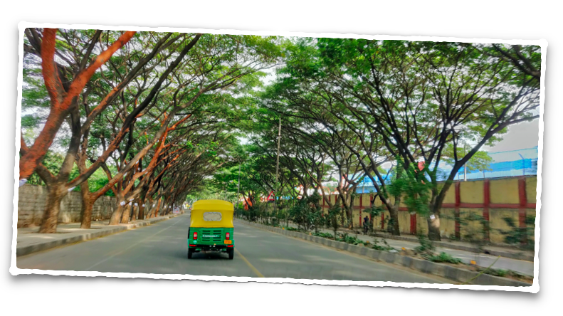 The canopy of trees along the HAL road in Bangalore