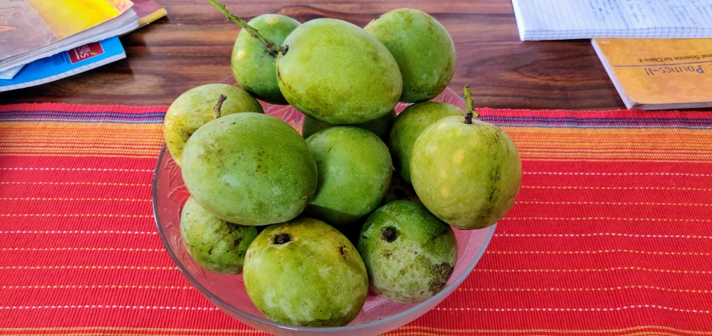 Mangoes will take a few days to ripen