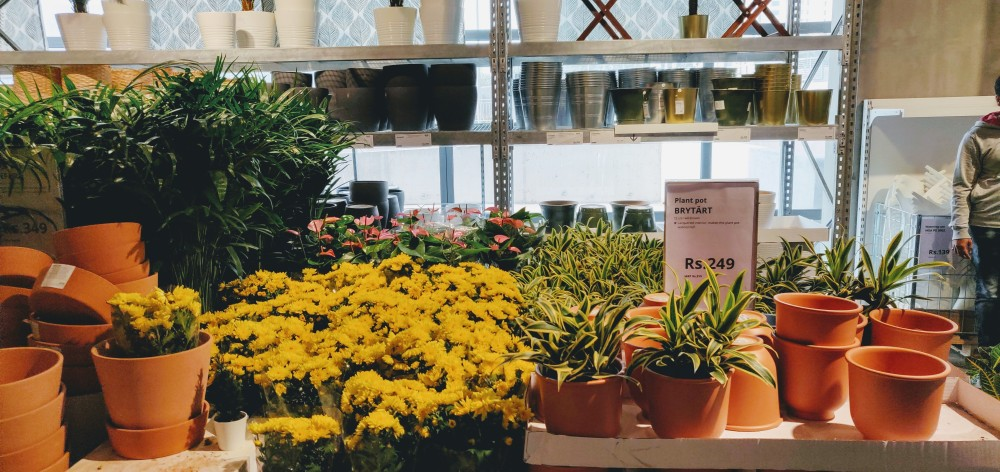 Plants - one of the most popular counters in Ikea