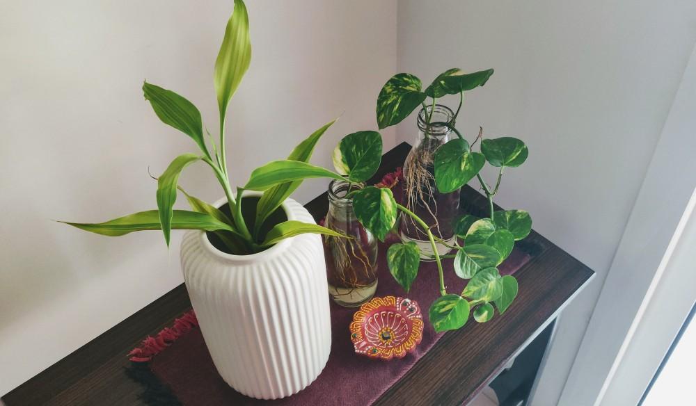 White vase from Ikea, Hyderabad