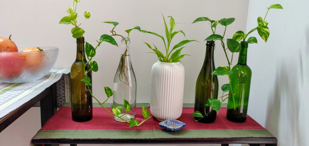 Money plants and Lucky Bamboo